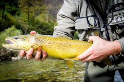 Pesca in Slovenia sul fiume Idrijca e Soca